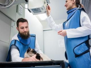 kočka rentgen