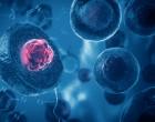 bunka,geny,rakovina
