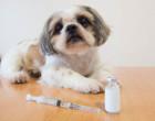 pes_vakcina_injekce_ockovani_veterinari