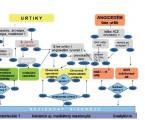 Současné praktické postupy pro vyšetřování aléčbu chronické urtikárie<br>Aktualizovaný přehled ainterpretace doporučených postupů pro praxi