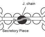 Struktura protilátek ajejich reaktivita