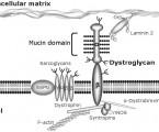 Congenital disorders of glycosylation: alpha-dystroglycanopathies