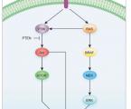 Molekulární aspekty nádorů štítné žlázy se zaměřením na mikroRNA a jejich klinické souvislosti