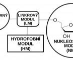 Vliv lipofosfonoxinů na inhibici bakteriální kolonizace kostních cementů