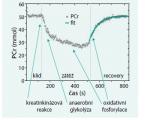 Syndrom diabetické nohy: význam MR spektroskopie lýtkových svalů pro hodnocení končetinové ischemie a efektu revaskularizace