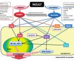 Alarminy a jejich role vperioperační medicíně