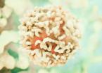 S diagnostikou nádorů neznámého origa může pomoci epigenetické profilování