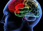Komerční kognitivní trénink nemá na mozkové funkce mladých dospělých žádný vliv