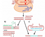 Control (editing) of the genome within reach, or already in our hands?