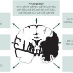 MikroRNA u cerebrovaskulárních onemocnění – od patofyziologie k potenciálním biomarkerům