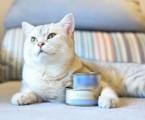 Krmiva pro psy a kočky: granule versus konzervy