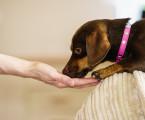 Vliv krmení na zdraví zvířat: prevence a léčba