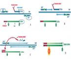 VYUŽITIE MULTIPLEXNEJ RT PCR V DIAGNOSTIKE MIKROBIONÁLNYCH PATOGÉNOV