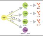 Role specifické buněčné imunity vpatogenezi roztroušené sklerózy se zaměřením na Th17aTreg lymfocyty