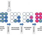 Molekulární mechanizmy primární  asekundární rezistence, molekulárně-genetické  znaky avlastnosti KIT/PDGFRA nemutovaných GIST