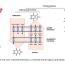 Nástin genetické architektury primární hyperurikémie a dny