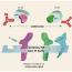 Ustekinumab – nová biologická léčba pro pacienty