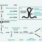 mikroRNA a vnitřní lékařství: od patofyziologie k novým diagnostickým a terapeutickým postupům