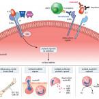 Inhibice dráhy interleukinu 5 v léčbě eozinofilních respiračních onemocnění – důkazy a nenaplněné potřeby