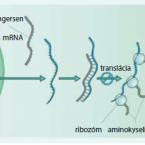 Súčasné a perspektívne biologiká a malé molekuly v liečbe idiopatických zápalových chorôb čreva