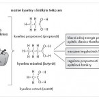 Význam komensální mikrobioty vregulaci tolerance kpotravinovým alergenům
