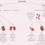 Sacubitril-valsartan (LCZ696) v léčbě srdečního selhání