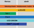 Experimentální modely systémové sklerodermie – cesta kpoznání aléčbě neléčitelné nemoci?
