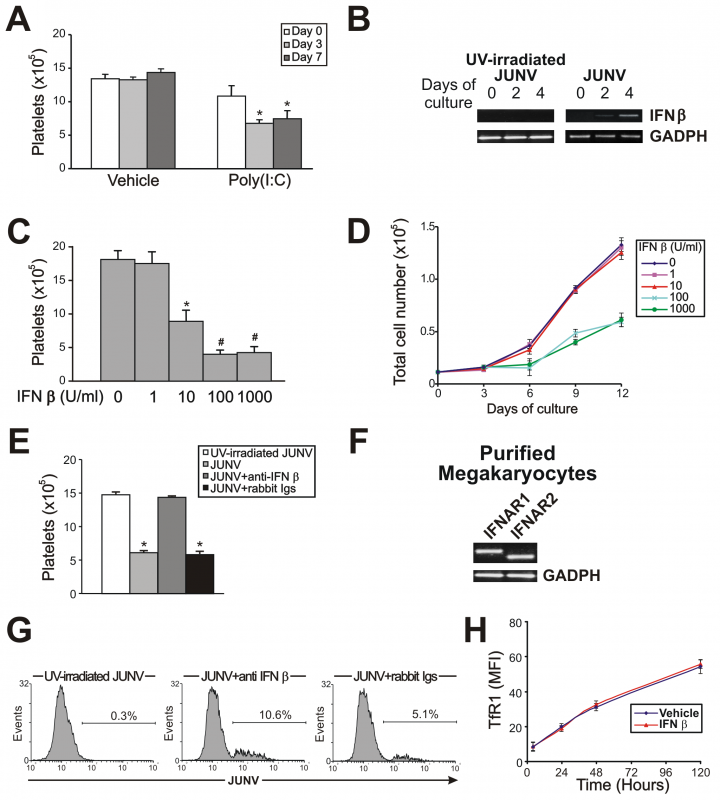 The role of the IFN β pathway in platelet production and JUNV infection.