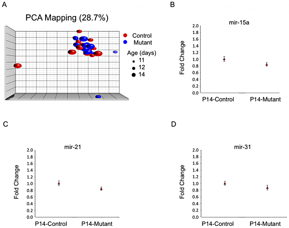 No evidence for distinct microRNA expression patterns.