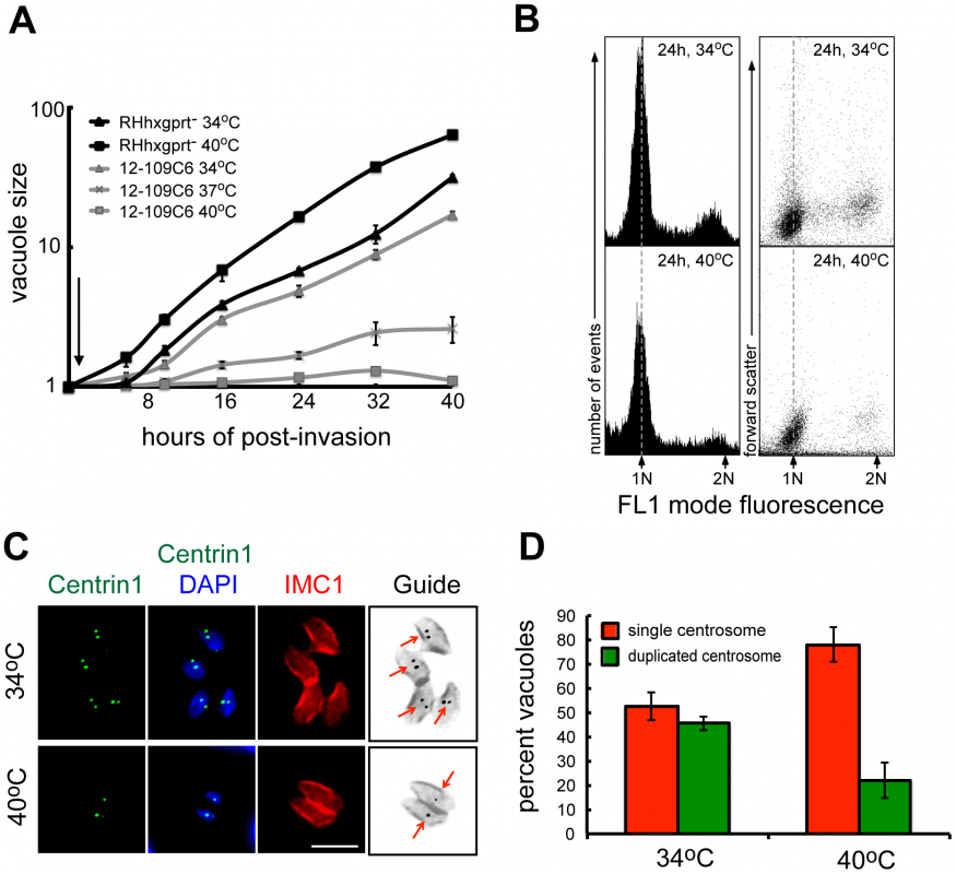 Chemical mutant 12-109C6 conditionally arrests in the G1 phase of the tachyzoite cell cycle.