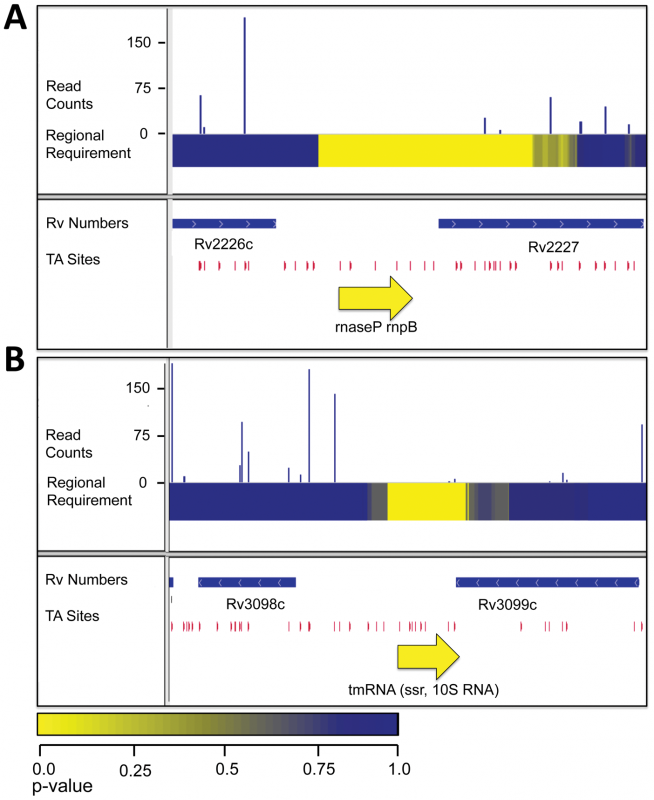 RNAs required for growth <i>in vitro</i>.