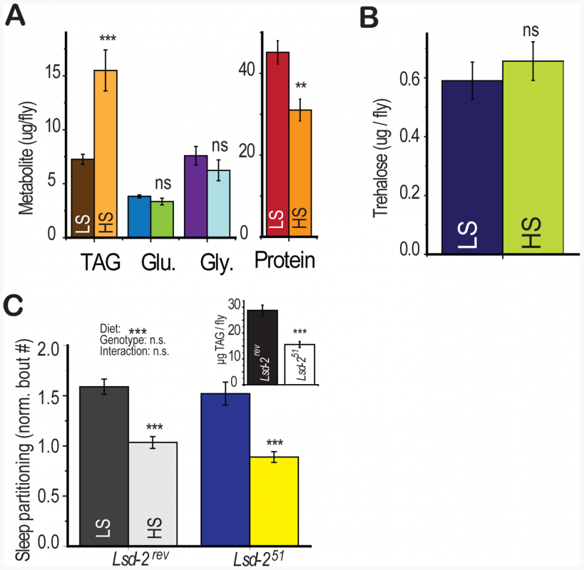 Diet-induced shift in energy storage is not sufficient to induce sleep partitioning.