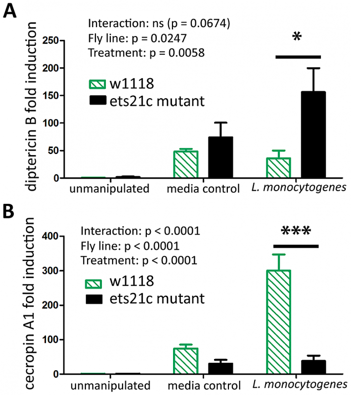 Ets21c has a minor affect on anti-microbial peptide expression similar to that of wntD.