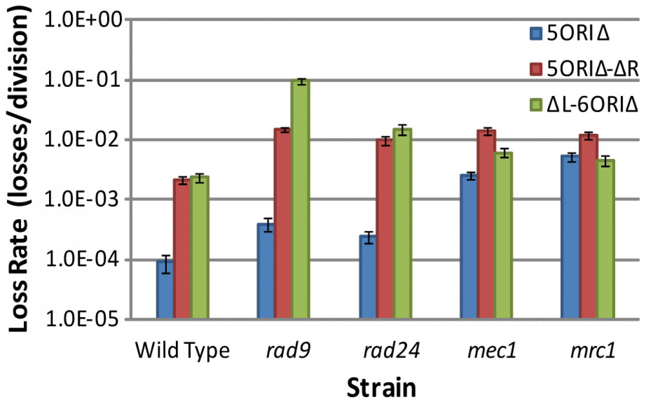 Comparisons of loss rates of ORIΔ derivatives in checkpoint mutants.