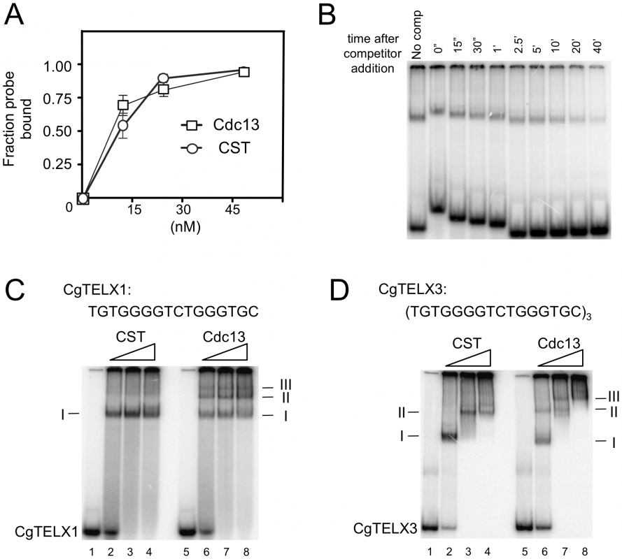 DNA–protein complexes generated by Cdc13 and CST.