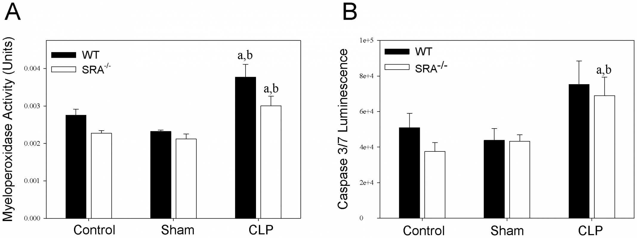 SRA deficiency had no effect on pulmonary neutrophil infiltration or splenocyte apoptosis during sepsis.
