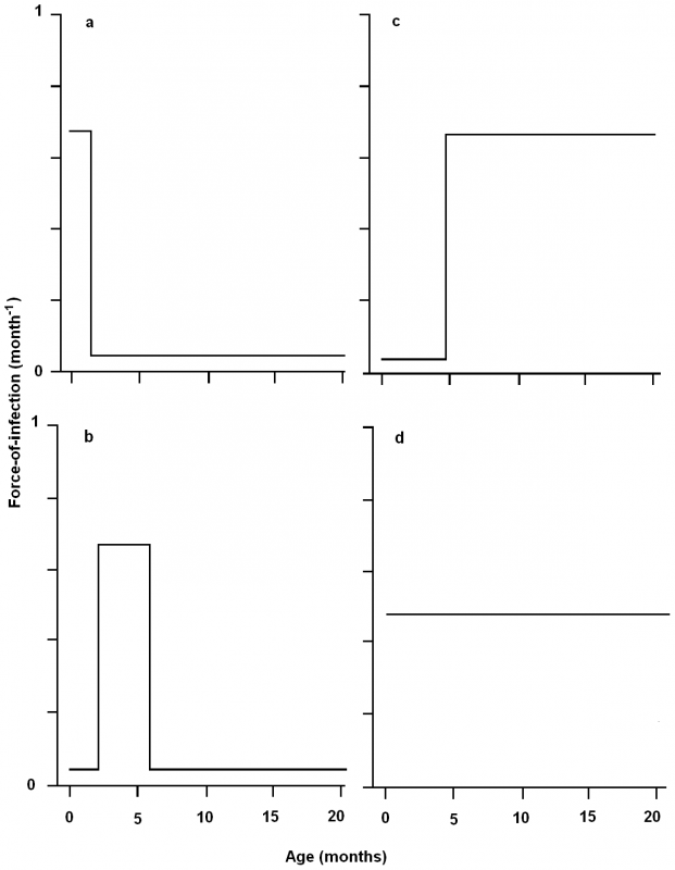 Schematic representing the possible age-specific force-of-infection for transmission of <i>Bordetella bronchiseptica</i> infection to New Zealand White rabbits in a commercial rabbitry.