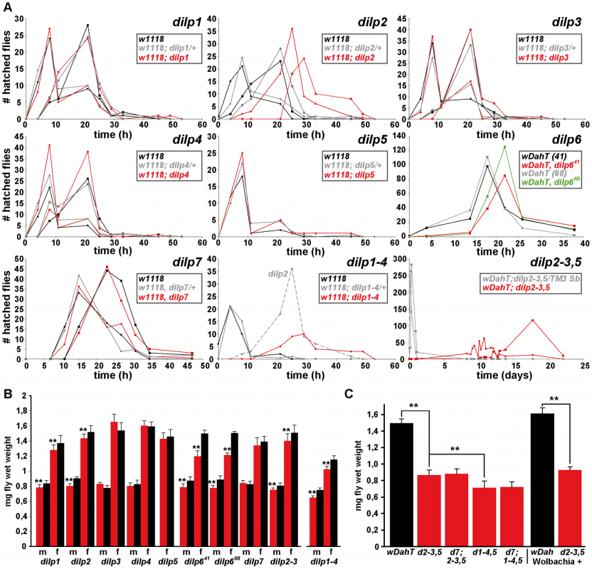 Development time and body weight of <i>dilp</i> mutants.