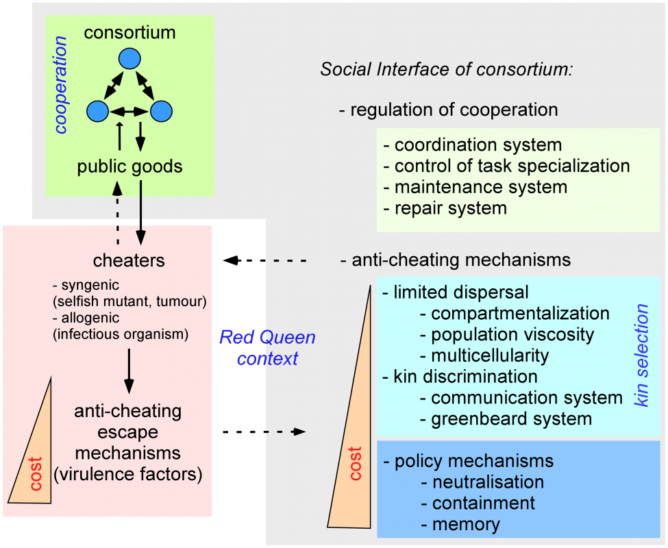 Role of the social interface in consortia.