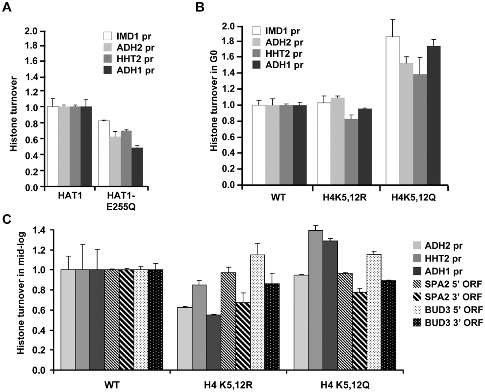 Role of Hat1 activity and localization in histone turnover.