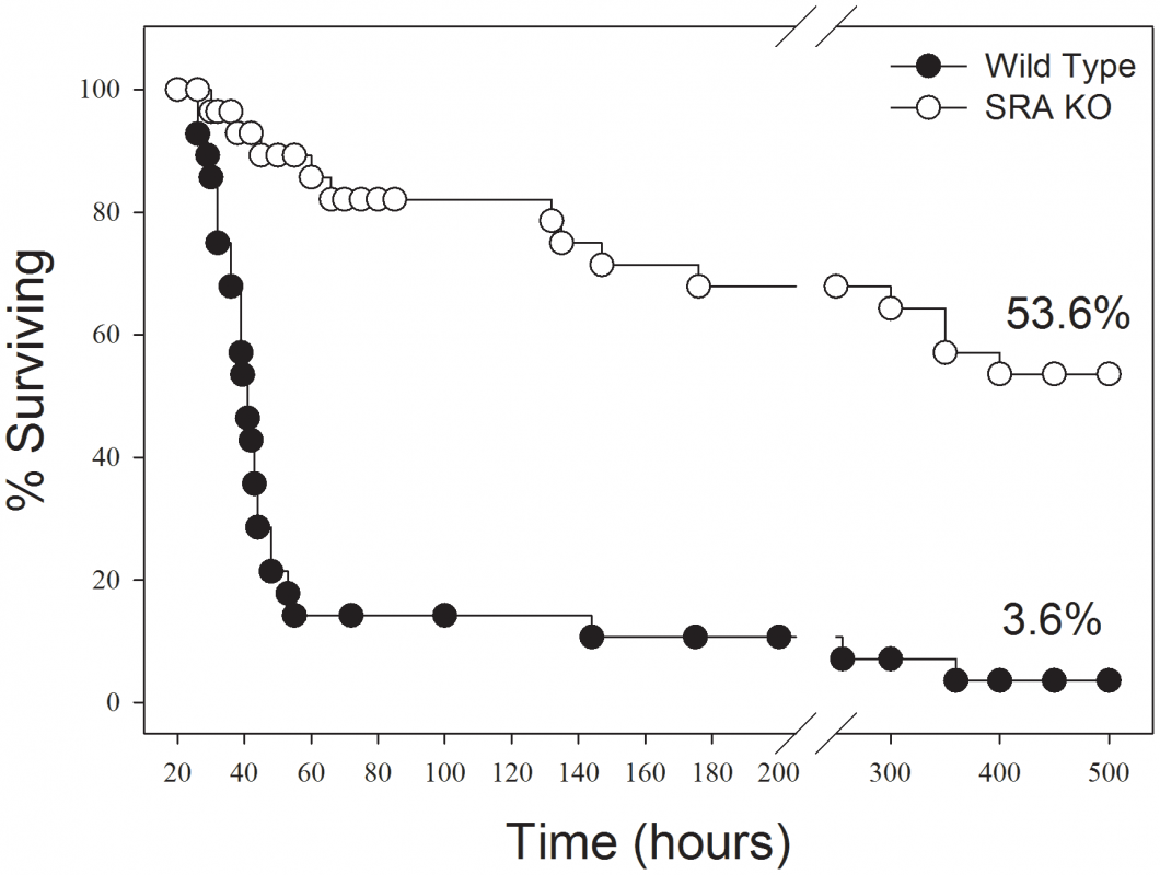 SRA deficient (SRA<sup>−/−</sup>) mice show increased long term survival in response to CLP induced sepsis.