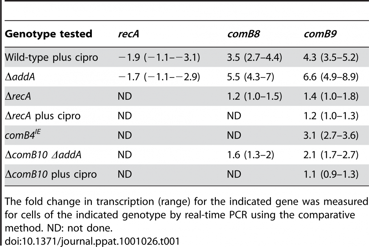 Transcription of the <i>com</i> T4SS is induced by DNA damage but <i>recA</i> expression is not.