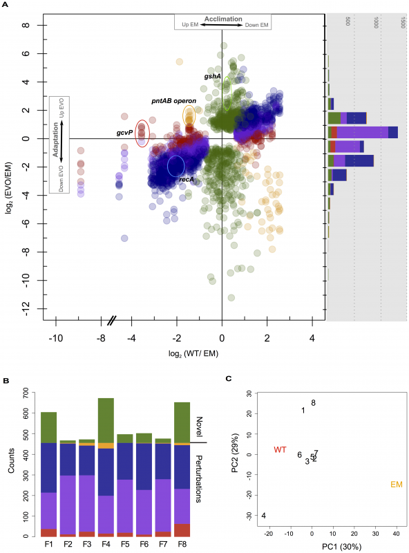 Microarray analysis of changes in gene expression in WT, EM, and each of the evolved strains.