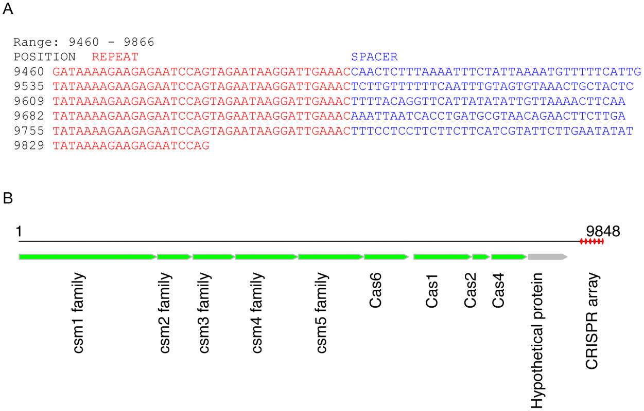 A potentially novel CRISPR array identified in a contig (9848 bases) from sample SRS012279.