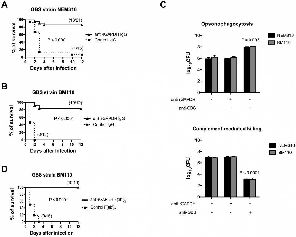 Passive immunization with purified anti-rGAPDH antibodies protects newborn mice from GBS-induced death.