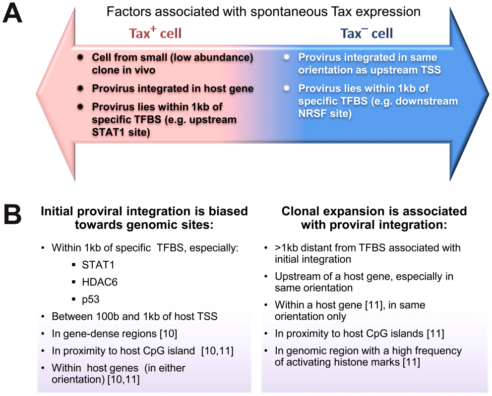 Genomic correlates of HTLV-1 proviral targeting, clonal expansion and proviral expression.