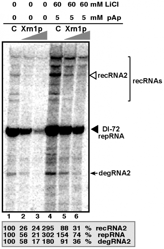 LiCl and pAp inhibit the activity of Xrn1p leading to increased accumulation of TBSV recRNA and degRNA in the cell-free yeast extract supporting TBSV RNA replication.
