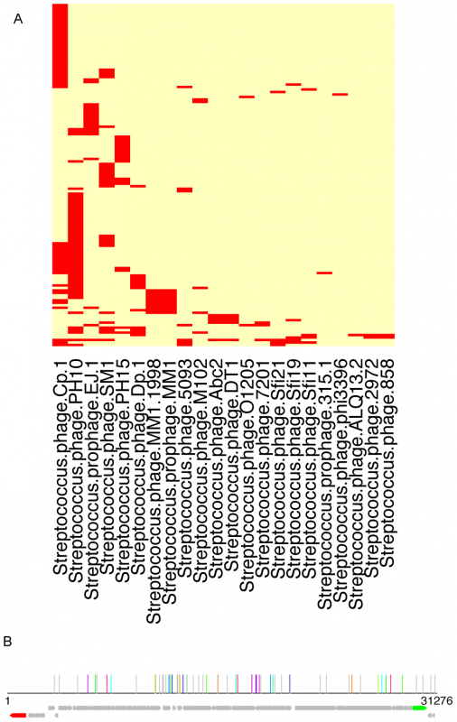 Traces of viral sequences in the streptococcal CRISPRs in human microbiomes.