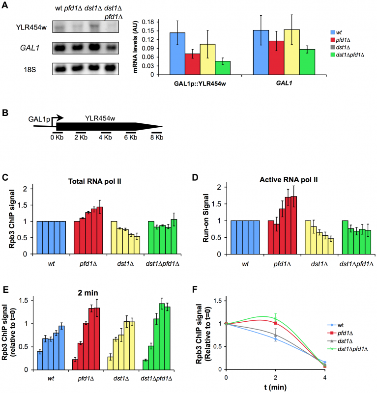 The absence of Pfd1 alters RNA polymerase II elongation across <i>GAL1</i>::YLR454w.
