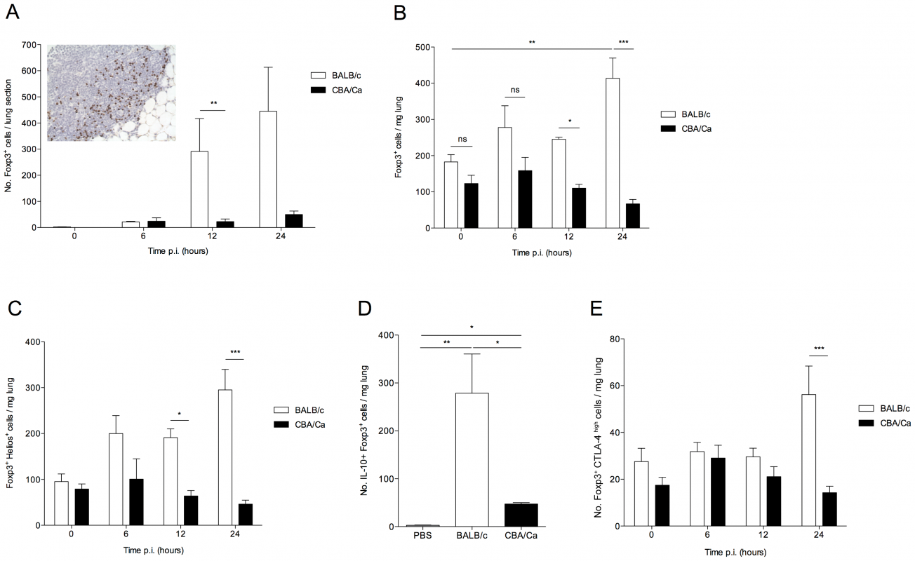 IL-10-producing natural T regulatory cells are rapidly recruited to the lung in <i>S. pneumoniae</i>-infected BALB/c mice.